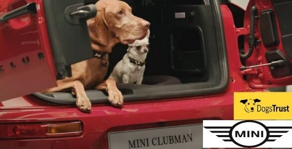 Dogs Trust and MINI Partnership