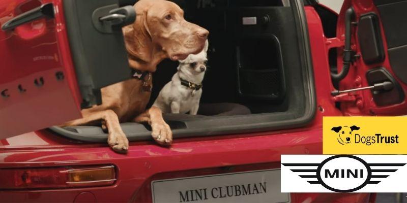 Dogs Trust and MINI Partnership - News